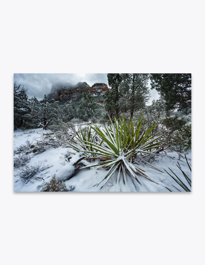 Think warm thoughts on cold winter days. Imagine you're exploring a hot desert in the summertime… If that doesn't work, you might as well go play in the snow!