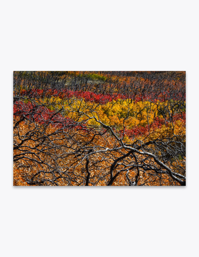 Driving through the foothills of the Manti-La Sal Mountains, you'll find yourself in a strange place between life and death. The charred and blackened remains of knotted limbs reach out of the newer undergrowth as the autumn leaf colors change to fiery reds, oranges and yellows. Ghostly but hauntingly beautiful.