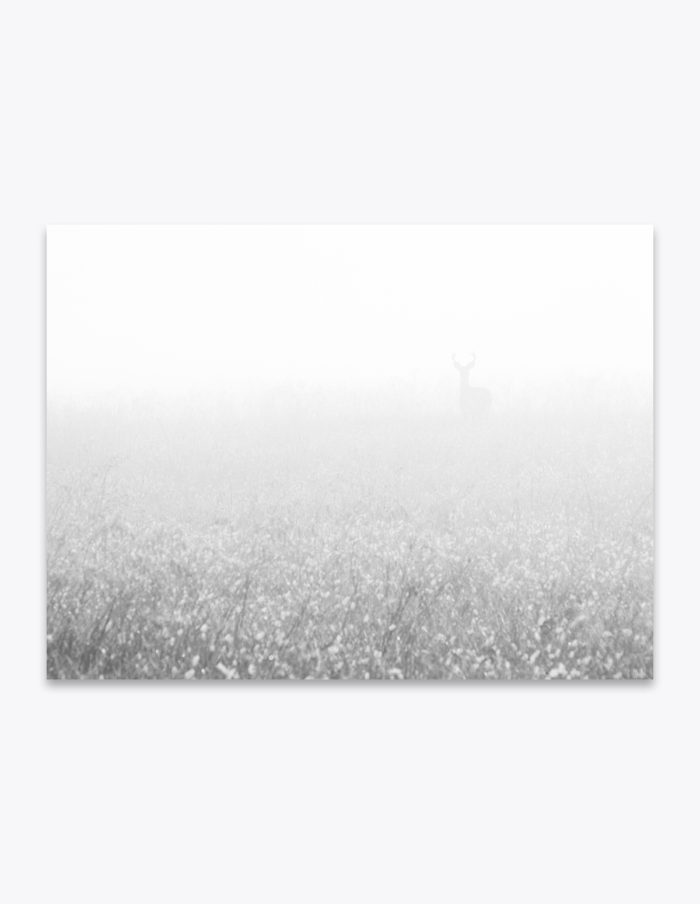 Some people are slightly unnerved by being in the dark. The feeling is induced by the thought of someone or something watching them. But do they get that same feeling while in a white-out fog? Is anyone afraid of the light?