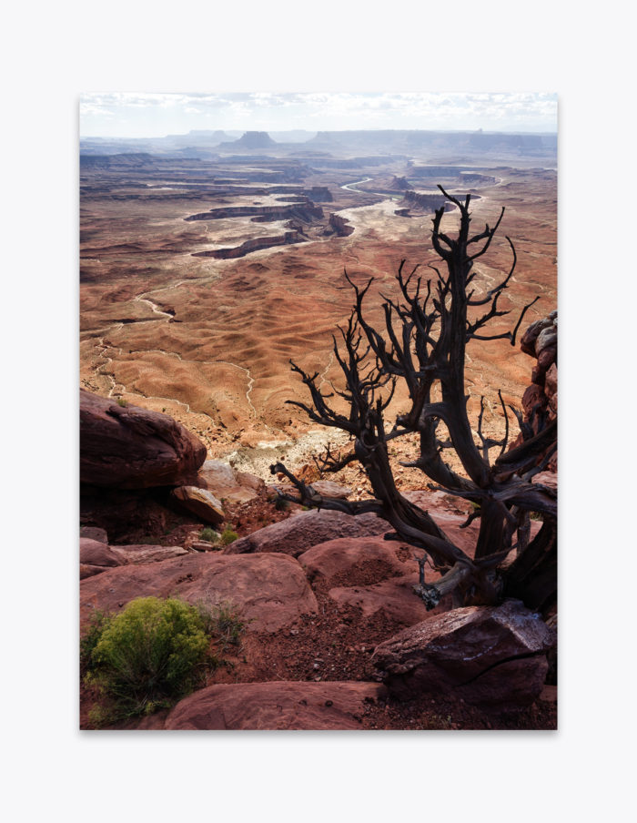 Intriguing similarities between branching juniper trees and eroded canyons carved out of the landscape. It could be argued that the shared patterns fall into the Golden Ratio or Fibonacci Sequence. Many other forms of nature make use of these proportions. Even the most pleasing compositions can be found to fit the shapes and patterns produced by these famous ratios.