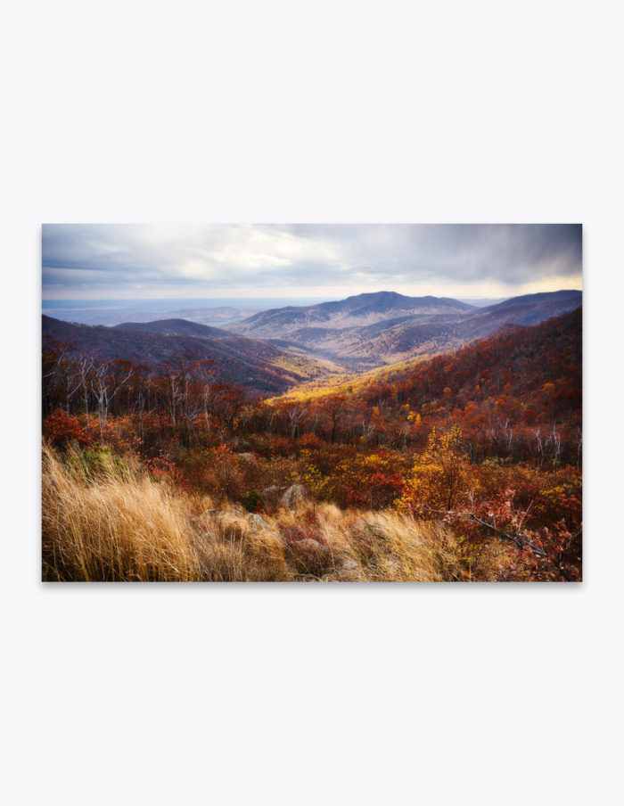 The valleys of Shenandoah are painted in a golden yellow and rusty amber during the transition of seasons. Even an occasional snowflake falls as a reminder that winter is just around the corner. Soon everything will be frosted over is a coating of snow and ice.