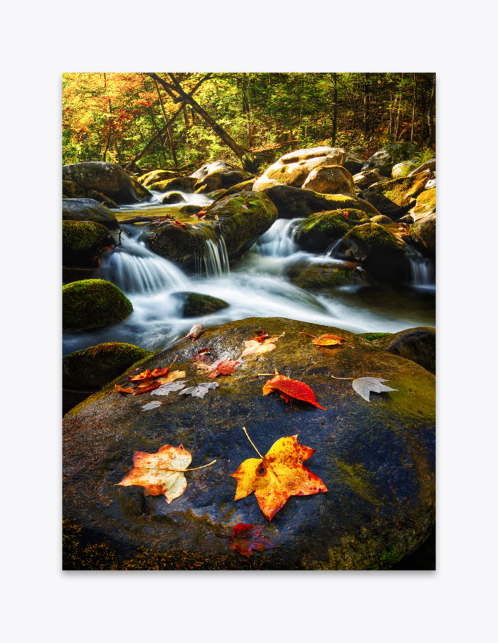 The colors of autumn wash away in nature's yearly cleanse cycle.